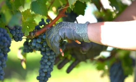 École du vin : La prestigieuse école de Bordeaux